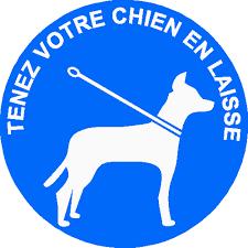 Arrêté relatif à la divagation des chiens